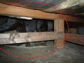 中古一戸建てホームインスペクション現場事例 ~床下の水漏れ・不具合